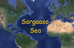 What is Ocean Currents and Sargasso Sea? Major Ocean Currents in the World